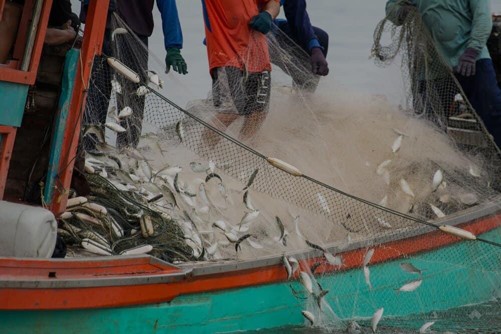 Fisheries-Fund-header-image-2.jpg